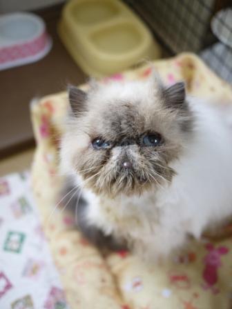 猫のお友だち ターボくん伽羅くんデンくん柊くん + うさぎのお友だち ファジーちゃん編。_a0143140_2230373.jpg
