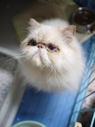 猫のお友だち ターボくん伽羅くんデンくん柊くん + うさぎのお友だち ファジーちゃん編。_a0143140_2230432.jpg