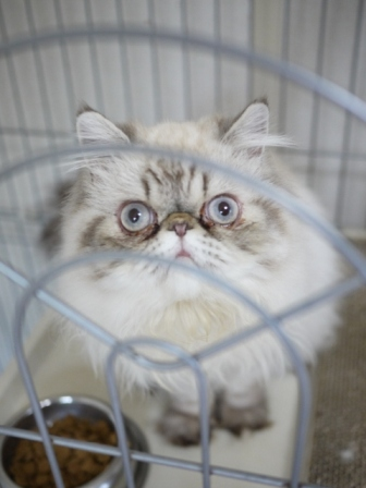 猫のお友だち ターボくん伽羅くんデンくん柊くん + うさぎのお友だち ファジーちゃん編。_a0143140_2231182.jpg