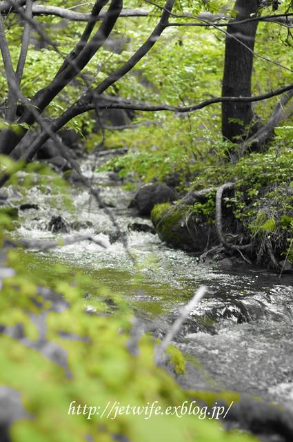 雨の森 今週の八ヶ岳_a0254243_105140100.jpg