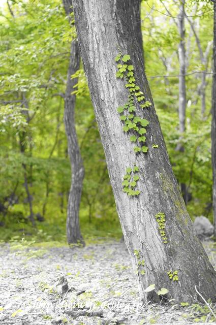雨の森 今週の八ヶ岳_a0254243_10522590.jpg