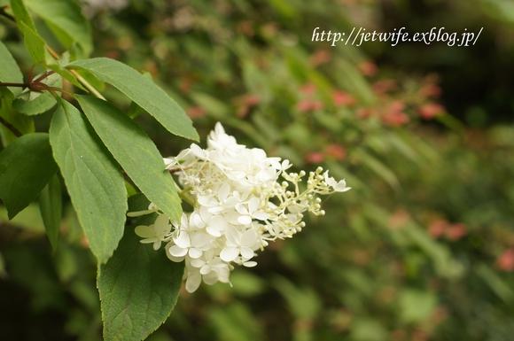 雨の森 花スナップ_a0254243_10574936.jpg
