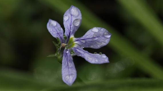 雨でぐしゃぐしゃ_b0214473_16471069.jpg