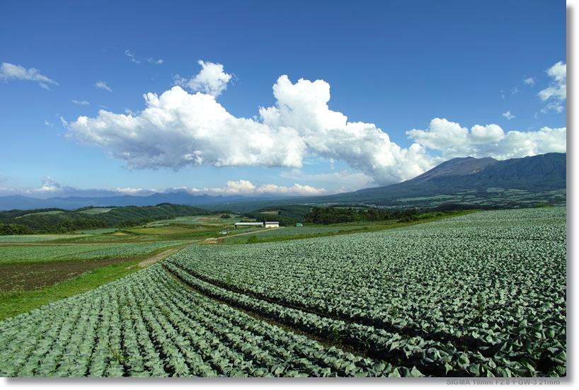 嬬恋のキャベツ畑で愛を叫ぶ_c0054876_175015.jpg