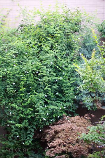 お庭のグリーンのシャンペトルブーケレッスン 2014_b0208604_15470312.jpg