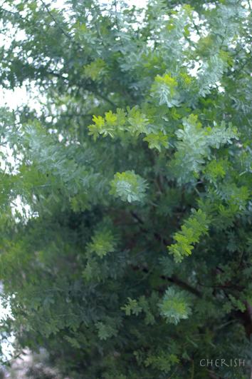 お庭のグリーンのシャンペトルブーケレッスン 2014_b0208604_15471774.jpg