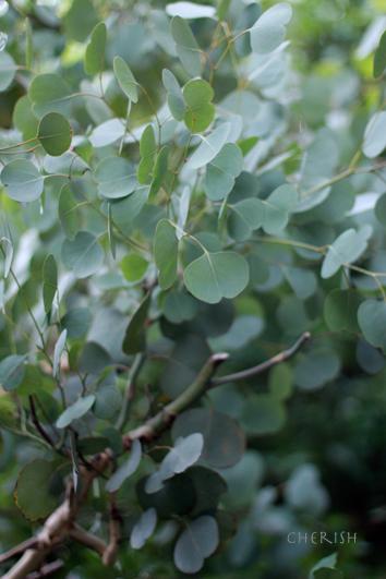 お庭のグリーンのシャンペトルブーケレッスン 2014_b0208604_15473109.jpg