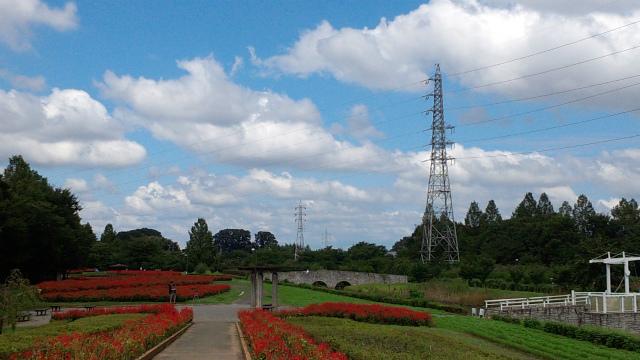 大宮花の丘に・・・・・_b0141906_2362686.jpg