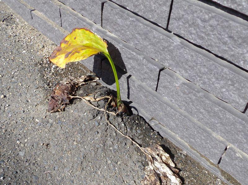 植物たちは秋めいてきています_c0025115_21333019.jpg