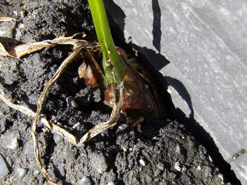 植物たちは秋めいてきています_c0025115_21333492.jpg