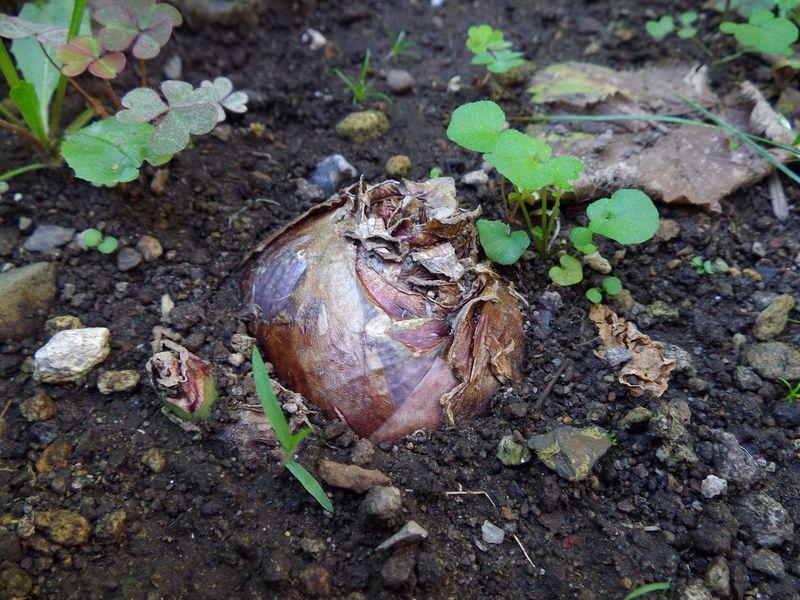 植物たちは秋めいてきています_c0025115_2138654.jpg
