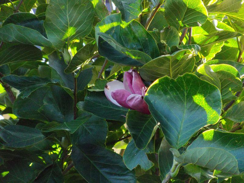 植物たちは秋めいてきています_c0025115_21484640.jpg