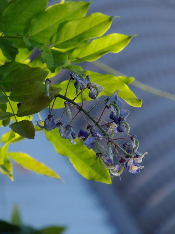 植物たちは秋めいてきています_c0025115_2149553.jpg
