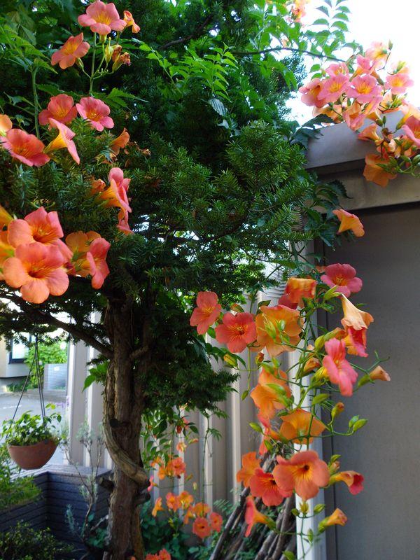 植物たちは秋めいてきています_c0025115_21533499.jpg