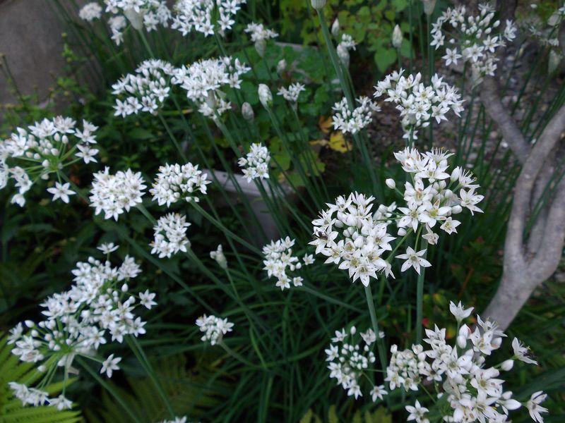 植物たちは秋めいてきています_c0025115_21543667.jpg