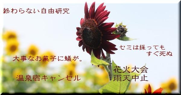 a0226853_17561557.jpg