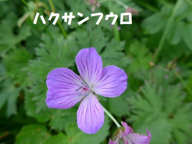 f0350083_005612.jpg