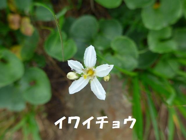 f0350083_01124.jpg