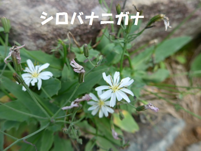 f0350083_02365.jpg