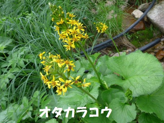 f0350083_02778.jpg