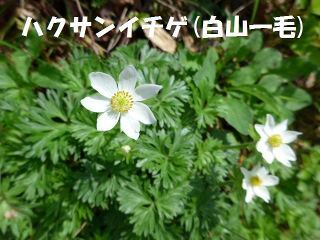 f0350083_035295.jpg