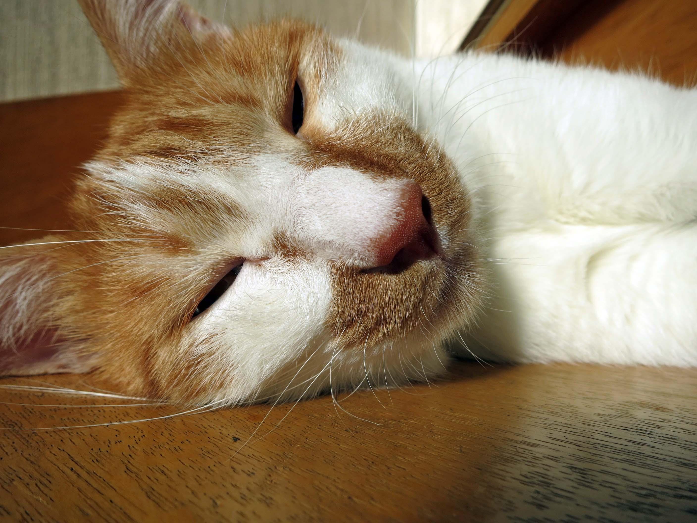 【猫】夏も・・・・_f0141609_18474754.jpg