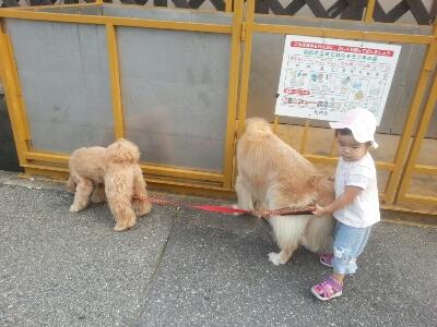 お散歩_e0136815_164428.jpg