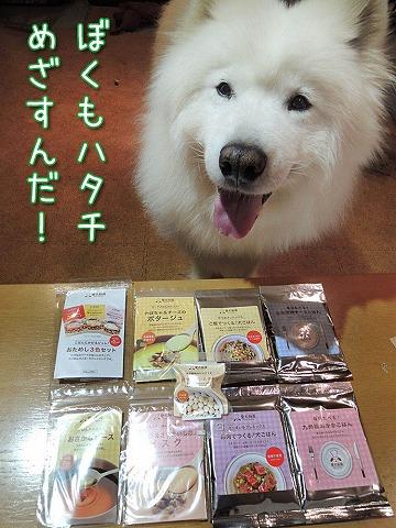 【モラタメ】 愛犬厨房 『おためしBOX』_c0062832_7243666.jpg