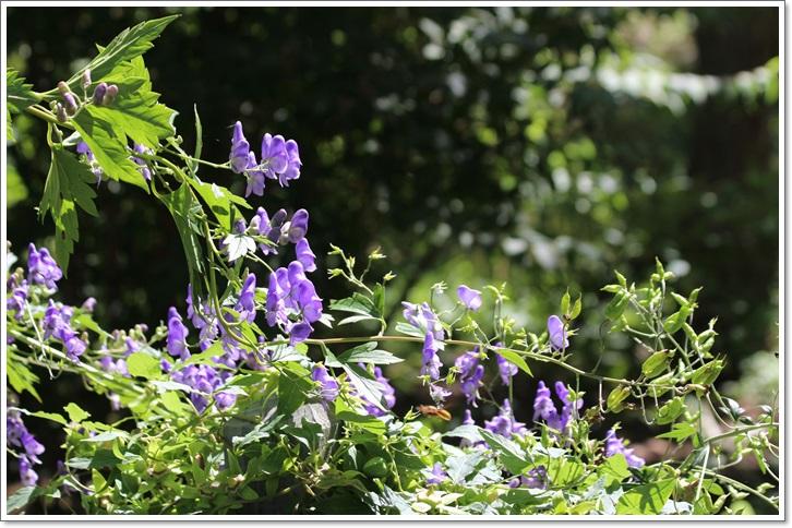 滝野カントリーガーデン(8・26)_f0146493_22543265.jpg
