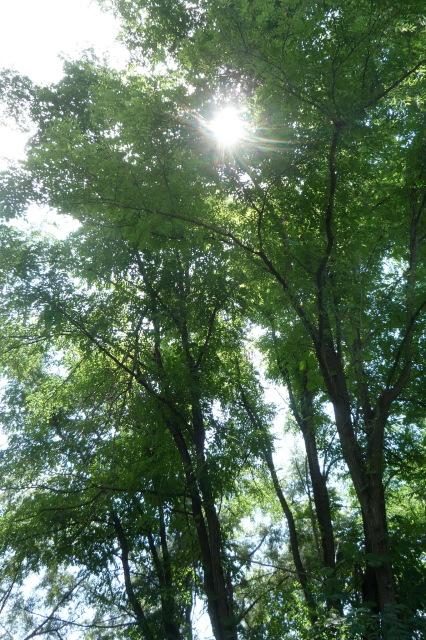 秋のはじめころ_a0214206_01095074.jpg
