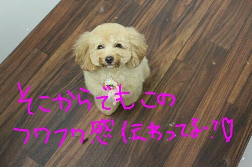 天使_b0130018_8143812.jpg