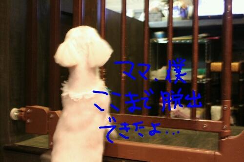 天使_b0130018_8214244.jpg