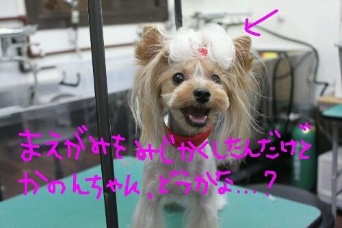 天使_b0130018_824980.jpg