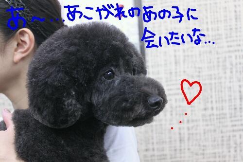 天使_b0130018_8322341.jpg
