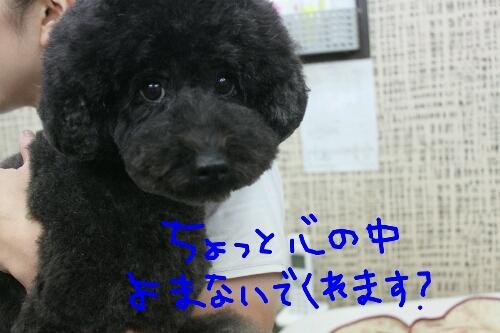 天使_b0130018_832339.jpg