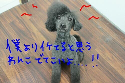 天使_b0130018_8352266.jpg