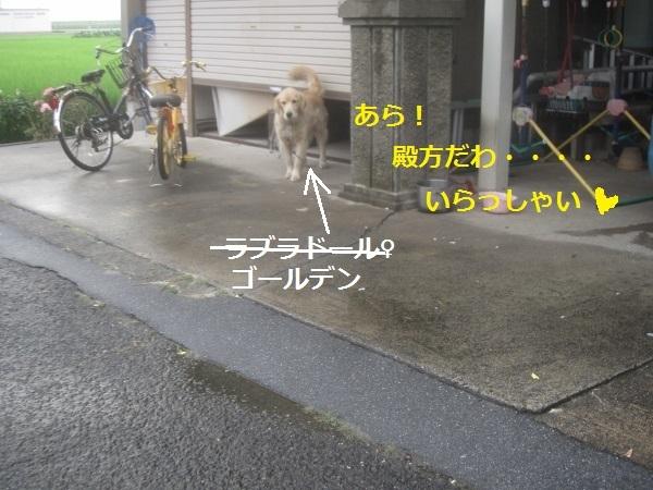 f0143123_21321468.jpg