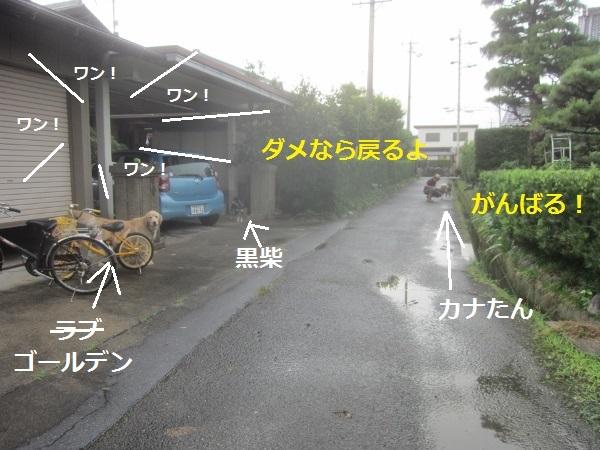 f0143123_2132763.jpg