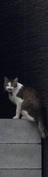 なつかしい猫に会いました。_b0199526_9183628.jpg
