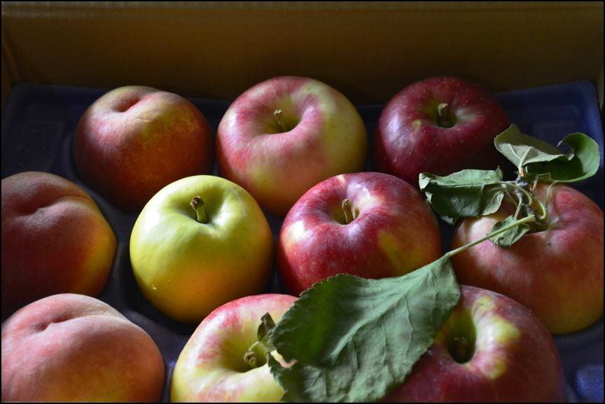 「つがる」「さんさ」新種のりんご<メルシー>&カルパッチョ_a0031363_2264539.jpg