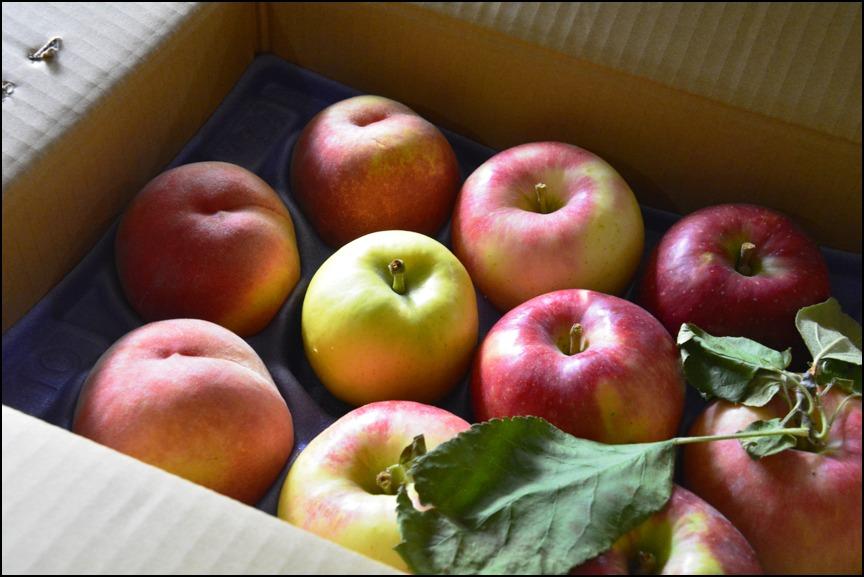 「つがる」「さんさ」新種のりんご<メルシー>&カルパッチョ_a0031363_2275998.jpg