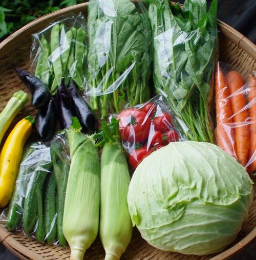 今週の野菜セット(9/2~9/6着)_c0110869_13275369.jpg
