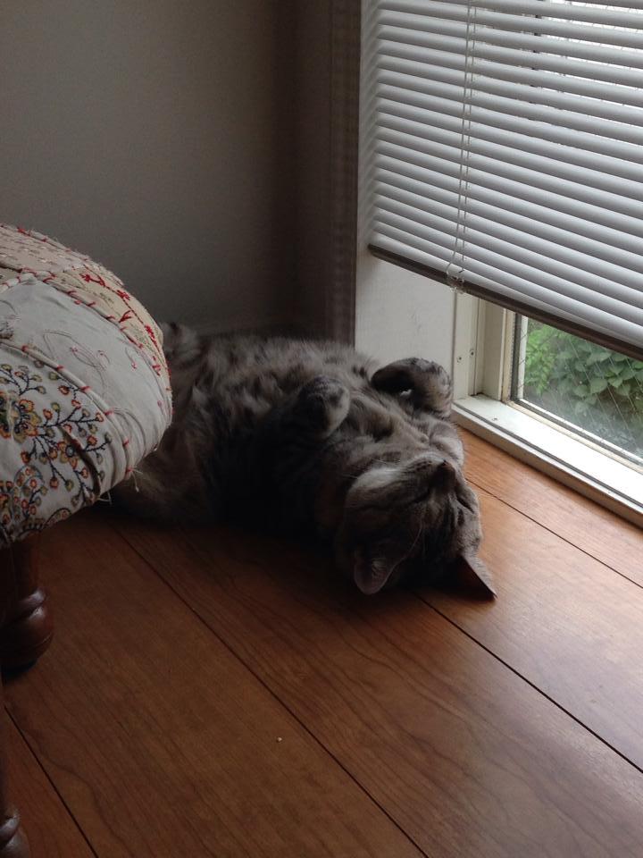 Cat near the window_b0195783_10175213.jpg