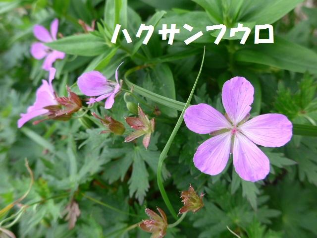 f0350083_23494946.jpg