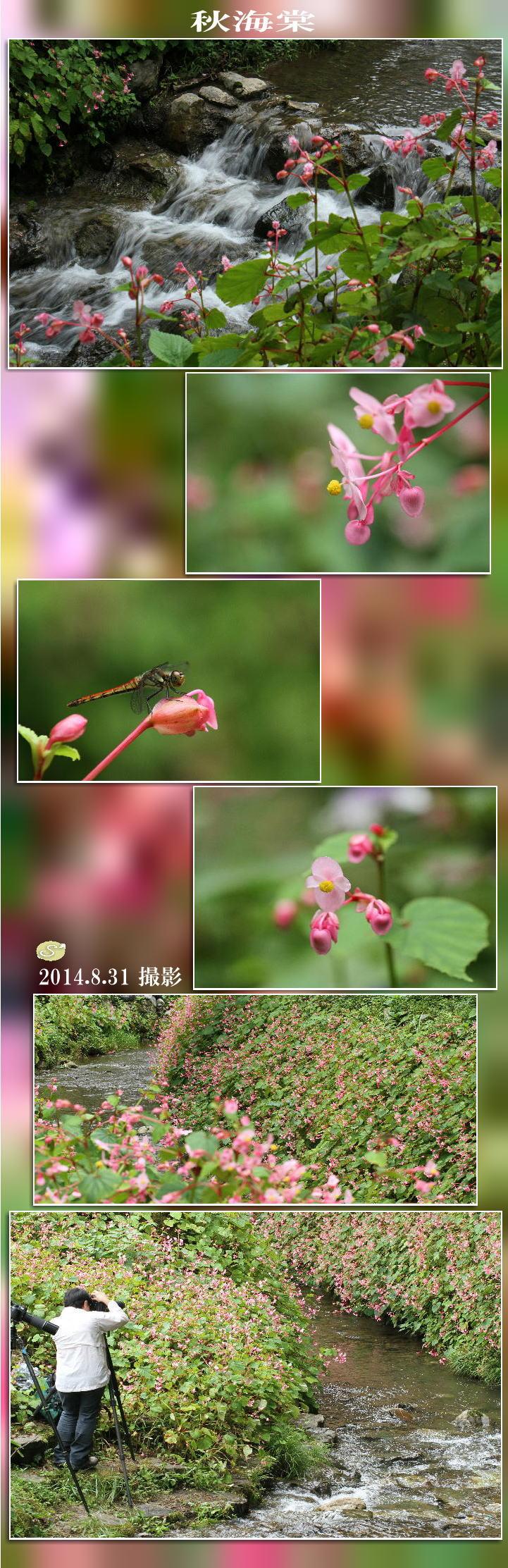 f0164592_18395240.jpg