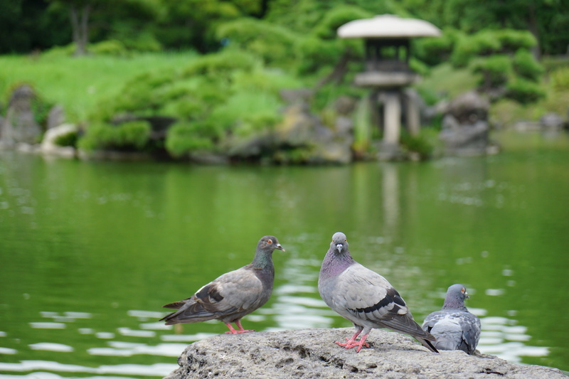 清澄庭園_f0224192_23303155.jpg