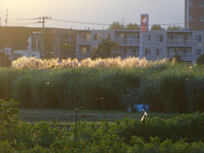 農場にはトンボがいっぱい_c0025115_19124871.jpg