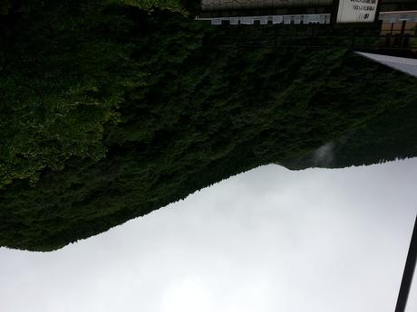 8月 徳島編_c0226146_1644652.jpg