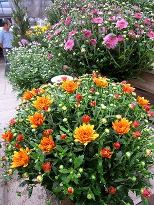 菊の季節です_c0141652_932873.jpg