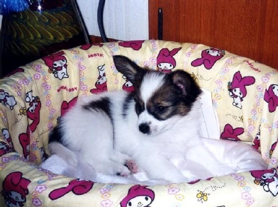 愛 犬_b0093754_18544923.jpg